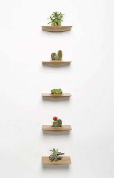 Cactus Shelf | Cactus and Shelves