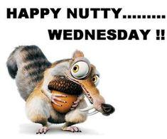 Happy Nutty Wednesday wednesday hump day wednesday quotes happy wednesday wednesday humor wednesday quote happy wednesday quotes