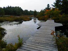 Six Mile Lake Provincial Park Ontario Canada - Autumn Ontario Camping, The Good Place, Sidewalk, Wanderlust, Canada, Autumn, Park, World, Places