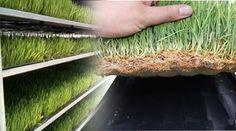 Guia: Producción Intensiva de Forraje Verde : .: Hydro Environment .: Plant Nursery, Permaculture, Hydroponics, Container Gardening, Environment, Mexico, Herbs, Ideas, Gardens