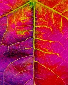Intricate detail of leaf seen in a whole new light when paired with such sensational colors. Very intriguing.