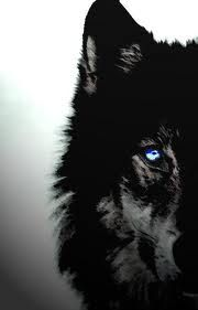 80 Best Wolves Images Wolf Wallpaper Wolf Wolf Pictures