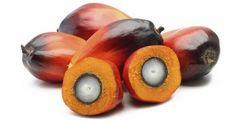 Olio di palma sconsigliato in Belgio. L'olio di palma fa male alla salute. La conferma arriva dal Belgio, dove il suo utilizzo è stato sconsigliato ufficialmente. Il Consiglio Superiore della Sanità belga si è pronunciato a suo sfavore, raccomandando di limitarne l'utilizzo. Non si tratta di un obiettivo semplice, poiché l'olio di palma è il grasso vegetale più utilizzato dall'industria alimentare.