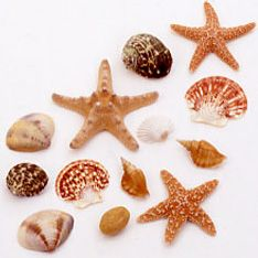 """Assorted sizes, colors and styles.                Sizes range from 1""""-3"""". Approx. 60-80 shells per  box."""