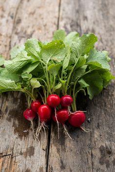 EASTER EGG RADISH (HEIRLOOM, 28 DAYS) - Pinetree Garden Seeds - Vegetables  - 1