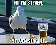 Finally found my mom's pet seagull....now just to find Walter her pigeon