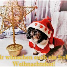 Wir wünschen euch Frohe Weihnachten   #rudi #hundeleben #dogstagram #dogslife #shihtzu #dogs #workingdogs #cute #cutedog #mydogiscutes #hund #dog #weihnachten #christmas #happy #look #mydog #lovemydog #santaclaus #weihnachtsmann