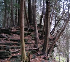 Bruce Trail - Niagara to Tobermory Ontario.my Dad LOVES this trail! Tobermory Ontario, Canada Eh, View Image, Forests, Georgian, Amazing Places, Wilderness, Family Travel, Adventure Travel