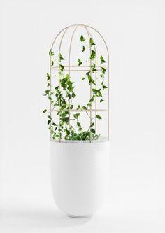 Patrick Nadeau pot plant with a twist House Plants Decor, Plant Decor, Vases, Foliage Plants, Green Life, Outdoor Plants, Green Plants, Garden Inspiration, Design Inspiration