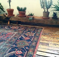 Earthy mix of wooden floor, navy blue & plants.
