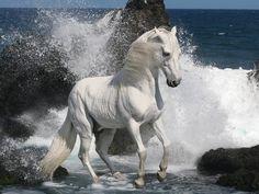 Cheval- magnificent creature!