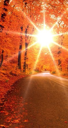 Healing Pathways: Autumn Series