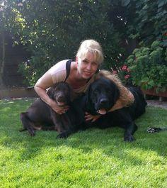 Labrador Retriever, Dogs, Animals, Labrador Retrievers, Animales, Animaux, Pet Dogs, Doggies, Animal