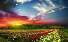 Rose Valley, Bulgaria [2560x1600] Romantic places in Europe #thisisbulgaria
