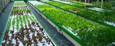 The cost of commercial aquaponics