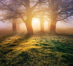 Nature Iluminated by the Sun | Green Landscapes