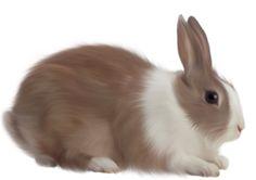 ältestes Kaninchen