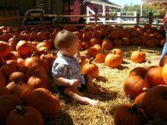 Vin Sean And Cie Select Their Pumpkins Visit To A California Pumpkin Patch Pinterest