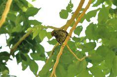 Bird view by Attila Molnar on YouPic Birds, Animals, Attila, Animales, Animaux, Bird, Animal Memes, Animal, Animais