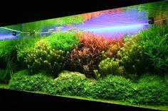 my god 5500 Litre planted tank. Planted Aquarium, Discus Aquarium, Aquarium Pump, Tropical Fish Aquarium, Aquarium Setup, Freshwater Aquarium Fish, Aquarium Design, Aquarium Decorations, Saltwater Aquarium