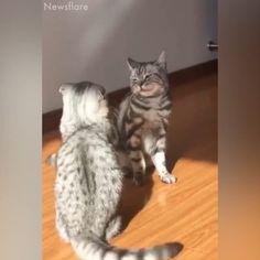 I love KATzzzzz – Funny Animal Videos – - Best Adorable Animals Cute Funny Animals, Cute Baby Animals, Animals And Pets, Cute Cats, Funny Cats, Cats Humor, Funny Horses, Adorable Kittens, Cute Animal Videos