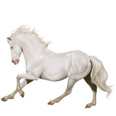Миролли, Pferd Isländer Cremello #45484450 - Howrse