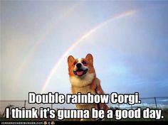 Double rainbow Corgi. #corgi