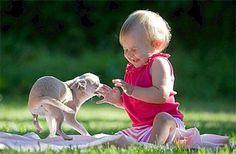 Los bebés que crecen con perros enferman menos