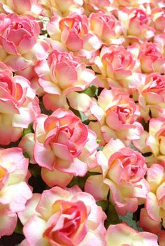 """Looking to sweeten up your DIY craft projects?  These handmade paper flowers in """"Buttercream"""" with a quick kiss of Pink are just the treat.  Discover 22 delicious colors at www.karasvineyardweddingshop.com"""