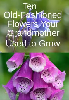 Do you want to grow these old-fashioned flowers? Visit my site to see the rest. #flowers #gardening #garden