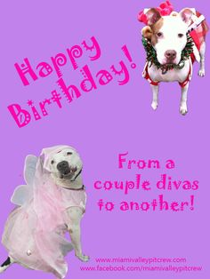 Lotus and Nova Lee (princess) Happy Birthday Diva. Happy Birthday Friend, It's Your Birthday, Bull Terriers, Pitbull Terrier, Cute Fairy, Dayton Ohio, Fairy Princesses, American Pit, Pit Bull