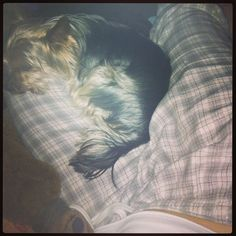 : At least someone is comfy #puppy #lazy