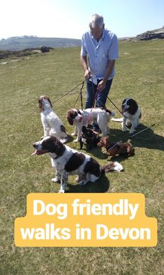 Andrewshayes Holiday Park has some Perfect Beautiful Relaxing East Devon Dog Pet Friendly WALKS for you all to go on. Enjoy the stunning Devon Countryside. Dog Friendly Holidays, Pet Dogs, Pets, Dartmoor, Dog Walking, Dog Friends, Devon, Walks, Woodland
