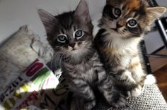 7 Curious Kittens- Cuteness for Today-