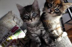 7 Curious Kittens