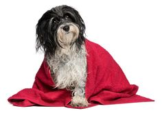 Housekeeping tips for dog and cat owners