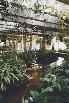 Paradise Backyard: Decio Tozzi