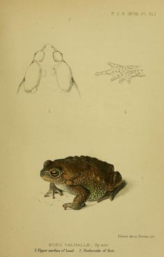Proceedings of the Zoological Society of London, 1908, May-Dec.