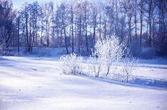 Зимний пейзаж.Мороз и солнце! (27)