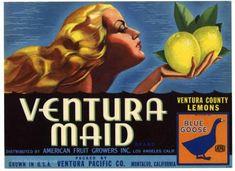 VENTURA MAID Vintage Montalvo Lemon Crate Label