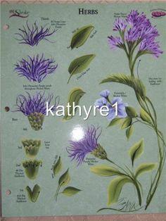 Donna Dewberry RTG Herbs Worksheet New One Stroke RARE | eBay