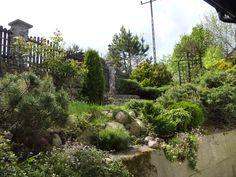 fragment ogrodu przed domem - 25.05.2015