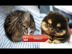 Funny cat videos Funny animals Funny Videos Most Popular Funny Videos  Funny cat videos Funny animals Funny Videos Most… #funnyanimals