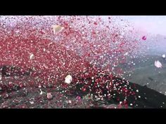 #Sony released this amazing campaign yesterday where they let 8 million brightly colored petals explode from a volcano in Costa Rica.The 8 mi...