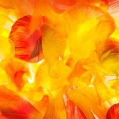 Wonderful Colors Flower Petal Art #retina #iPad #Air #wallpaper