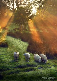 Holy Sheep!