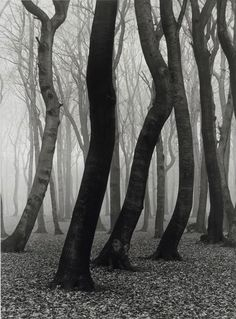 Buchenwald, 1936 by Albert Renger Patzsch I have always been fascinated by tree trunks. For some reason, the entire tree, unless it is th. Albert Renger Patzsch, Black White Photos, Black And White Photography, Landscape Photography, Art Photography, Straight Photography, Vintage Photography, Photo D Art, Pics Art