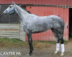 Each year, lots of racing thoroughbreds find their way into new homes and new careers. There are two schools of thought when a horse steps o...