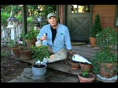 great video on white fly pest control remember 50% rubbing alcohol spray / worm casting