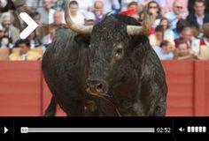 Mundotoro.com.  Día 16 Abril de 2013:   CRÓNICA del séptimo festejo de Sevilla 'El Dúo Sacapuntas' #Cronica #toros #Sevilla #video #fotos